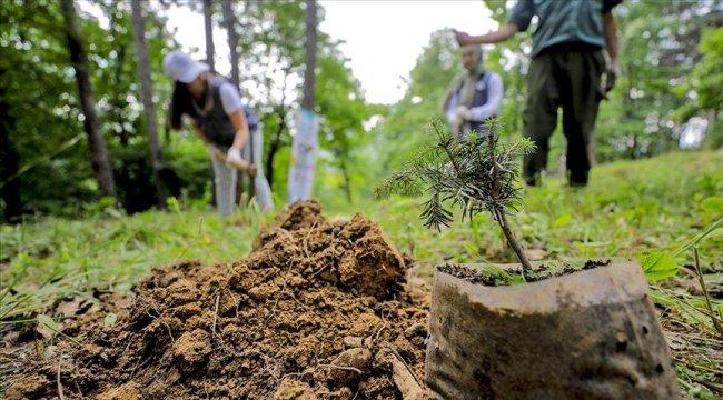35 ülkede aynı anda ağaç dikilecek