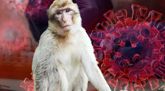 Çin'de Şimdi de Maymun Virüsü İlk ölüm gerçekleşti