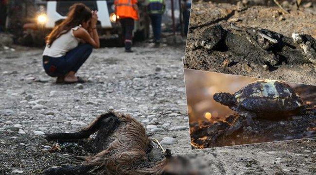 Manavgat'taki yangının boyutu gün ağarınca ortaya çıktı